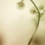 Fleurs dans le style de couleur de vintage sur la texture de papier de mûre Photographie stock libre de droits