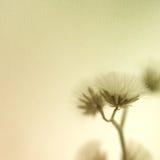 Fleurs dans le style de couleur de vintage sur la texture de papier de mûre Photographie stock