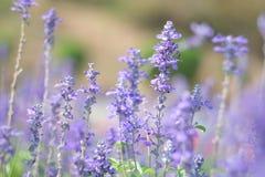 Fleurs dans le style de doux et de tache floue Image libre de droits