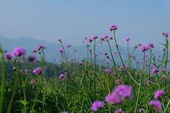 Fleurs dans le style de doux et de tache floue Photographie stock libre de droits