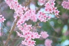 Fleurs dans le style de doux et de tache floue Photos stock