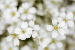 Fleurs dans le style de doux et de tache floue pour le fond photo libre de droits