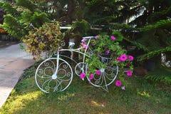 Fleurs dans le vélo de panier photo libre de droits
