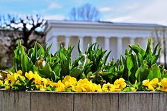 Fleurs dans le Volksgarten à Vienne Photo libre de droits