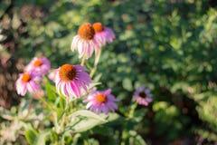 Fleurs dans le zoo d'Indianapolis Images stock