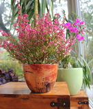 Fleurs dans les bacs Photos libres de droits