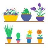 Fleurs dans les bacs Photo stock