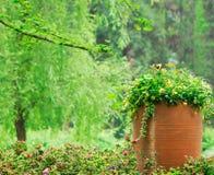 Fleurs dans les batteries Photo libre de droits