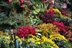 Fleurs dans les jardins Image libre de droits