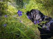 Fleurs dans les montagnes Photos libres de droits