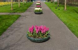 Fleurs dans les planteurs images stock