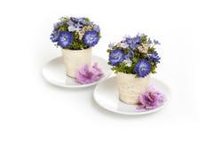 Fleurs dans les soucoupes sur un fond blanc Photo libre de droits