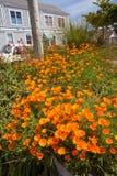 Fleurs dans Mendocino, la Californie Images stock