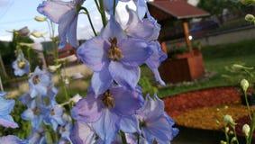 Fleurs dans notre jardin Photo libre de droits