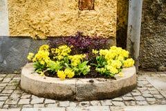 Fleurs dans un bac Photo libre de droits