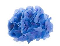 Fleurs dans un bouquet Photos stock