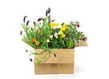 Fleurs dans un colis photographie stock