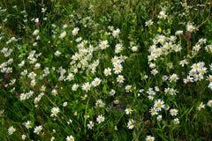 Fleurs dans un domaine Photos libres de droits