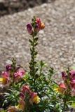 fleurs dans un jardin de cottage Images libres de droits