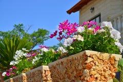 Fleurs dans un pot à l'avant de la maison Photo stock