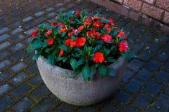 Fleurs dans un pot de fleurs gris Conception de jardin photos stock