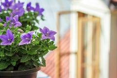 Fleurs dans un pot dehors Images libres de droits