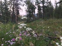 Fleurs dans un pré devant des arbres Photo libre de droits