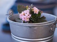 Fleurs dans un seau Image stock