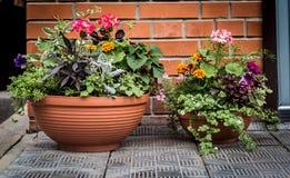 Fleurs dans un vase Photos stock