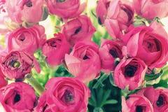 Fleurs dans un vase en verre Photo libre de droits