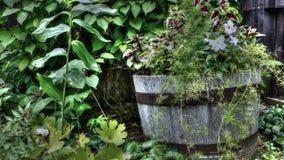 Fleurs dans un vieux baril en bois photos libres de droits
