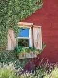 Fleurs dans une boîte de fenêtre Photographie stock libre de droits