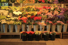 Fleurs dans une boutique de fleurs Image libre de droits