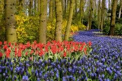 Fleurs dans une forêt Image libre de droits