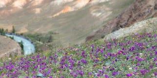 Fleurs dans une vallée de montagne Photos stock