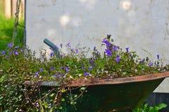 Fleurs dans une vieille brouette Images stock