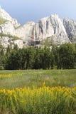 Fleurs dans Yosemite Image libre de droits
