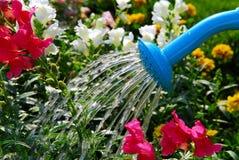 Fleurs de arrosage Photographie stock libre de droits