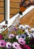 Fleurs de arrosage Photo libre de droits