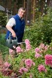 Fleurs de arrosage d'homme aîné dans le jardin Images stock