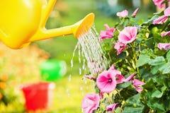 Fleurs de arrosage dans le jardin Photographie stock libre de droits