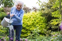 Fleurs de arrosage de femme supérieure dans le jardin photo stock