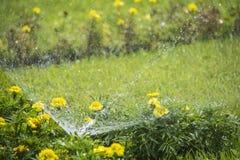 Fleurs de arrosage de l'eau de pulvérisation Photographie stock libre de droits