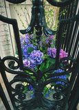 Fleurs de balcon Photo stock