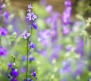Fleurs de Beautful Image libre de droits