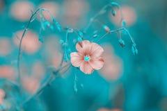 Fleurs de beaux tons de lin sur un fond bleu Fleurs sensibles de lin dans le pré images libres de droits