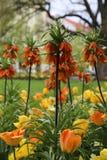 Fleurs de betterave Photo libre de droits
