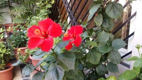 Fleurs de bonheur Photographie stock libre de droits