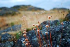 Fleurs de bord de la mer Photos stock
