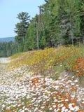 Fleurs de bord de la route Image libre de droits
